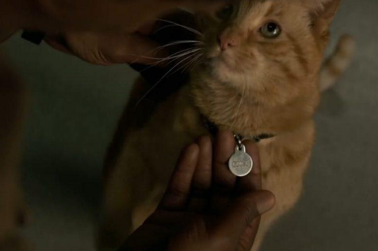 El aterrador misterio que rodea al gato de Captain Marvel