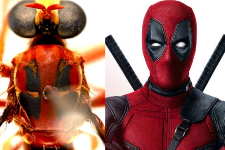 Deadpool, Thor, Loki, Black Widow y Stan Lee: las nuevas especies de mosca